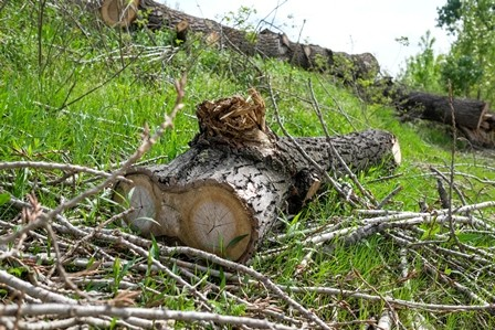 Drvo Savski kej