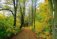 Šuma Jesen