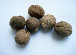Muskatni oraščić