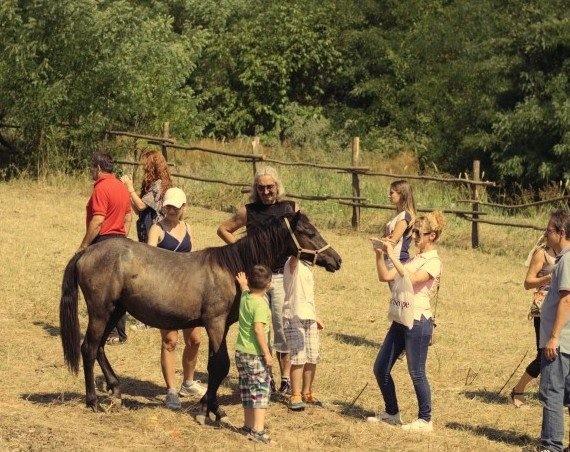 Azil za konje