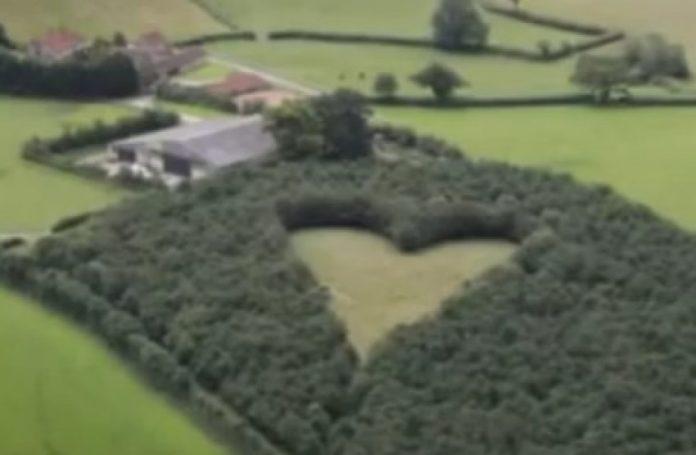 Srce u šumi