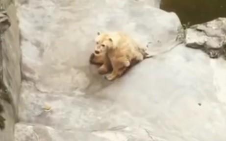 Zoološki vrt