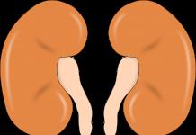 Bubrezi