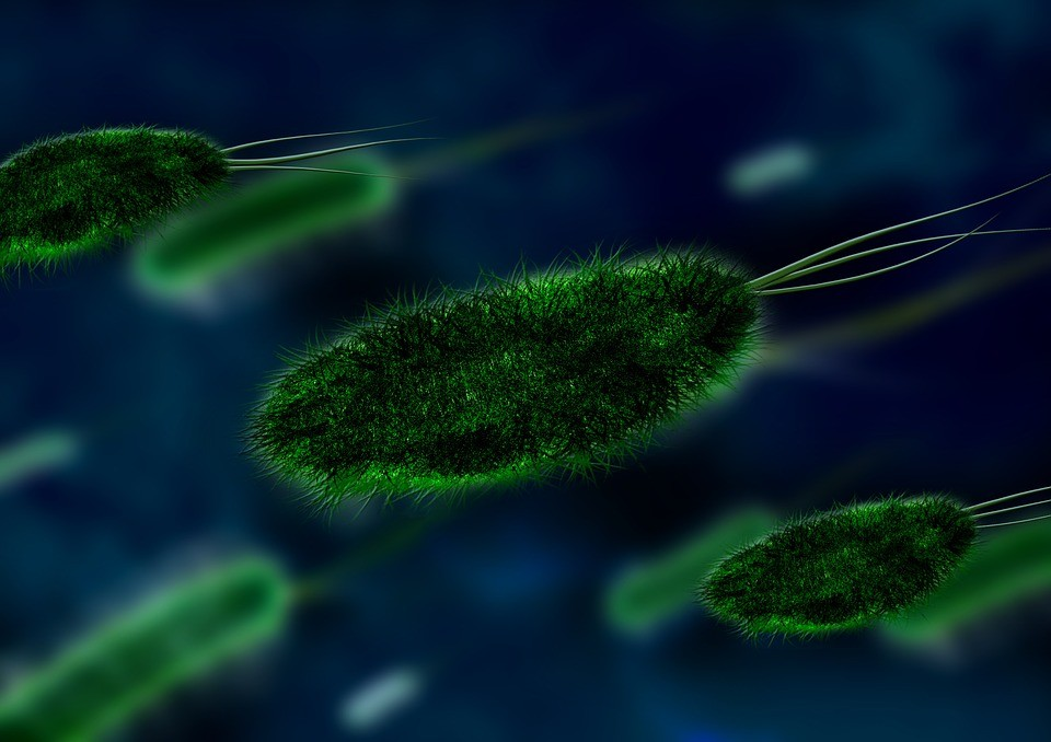 bakterija