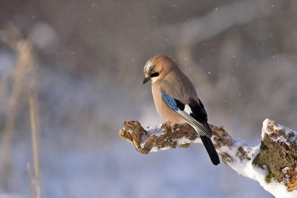 Zima i sneg