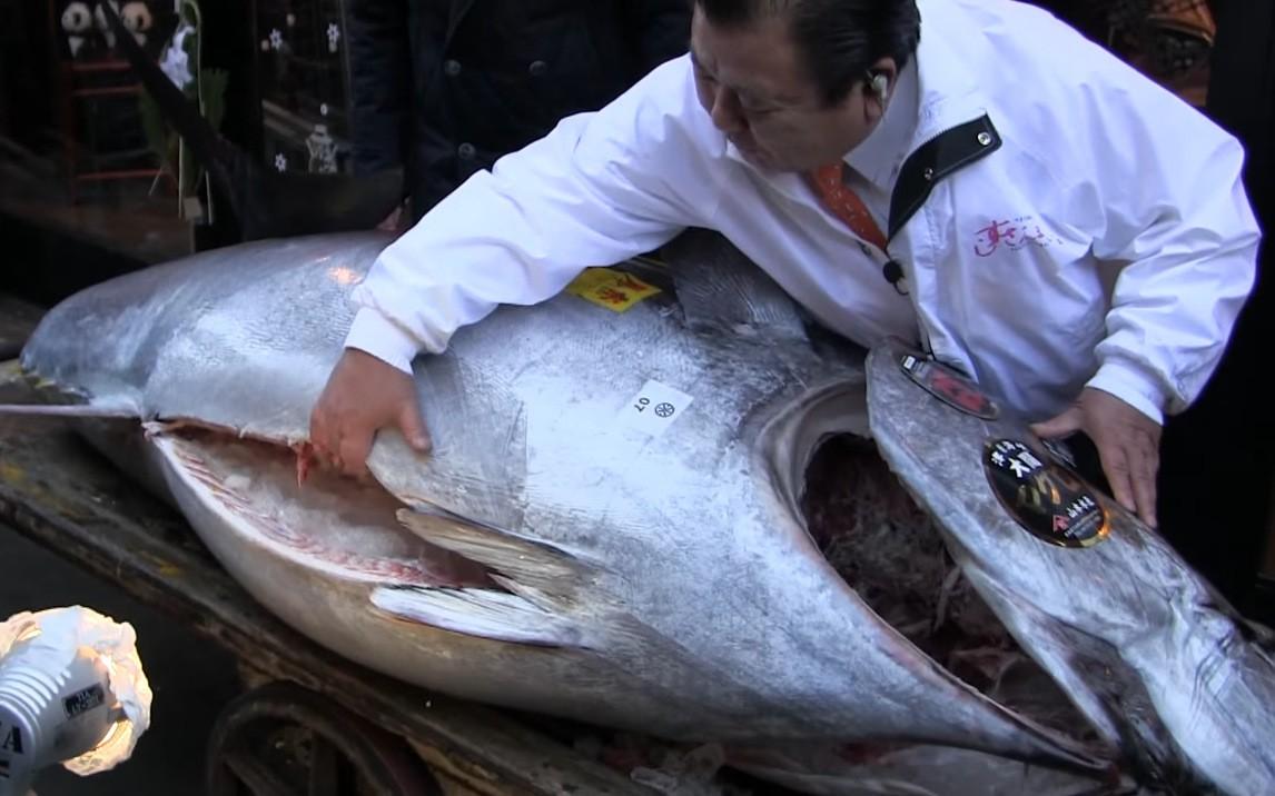 plavorepa tuna