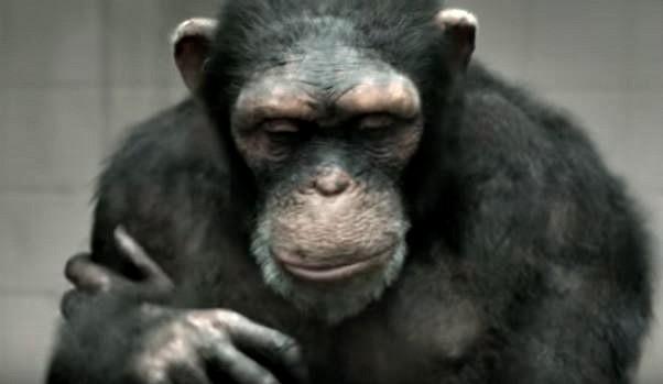 tuzan majmun