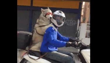 pas na motoru