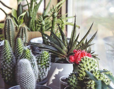 sobne biljke