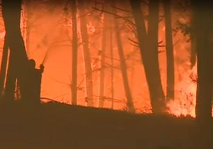 Šumski požar u Portugalu