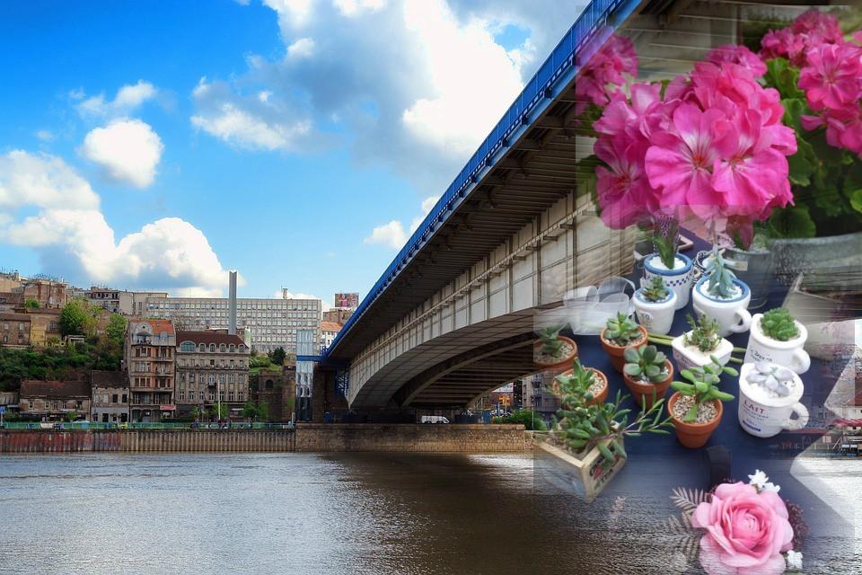 cvece i brankov most