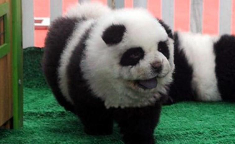 Pas Panda