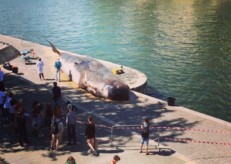 Kit na obali Sene u Parizu