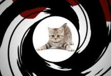 Mačke špijuni