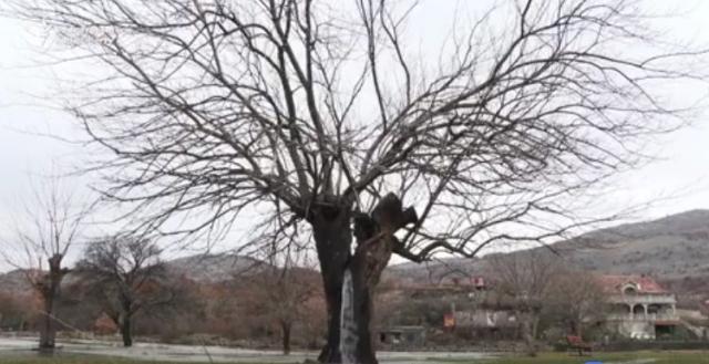 Drvo sa vodom