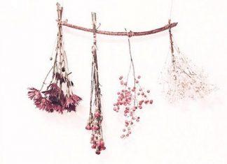 Suvo cveće