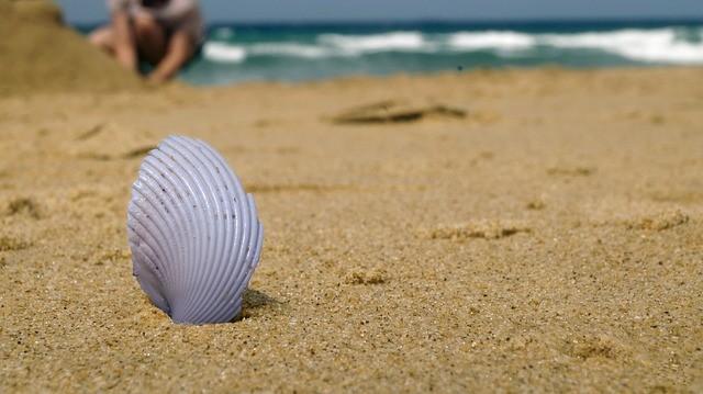 Školjka More Plaža
