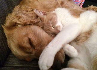 Pas i mačka