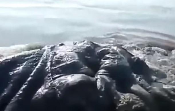 Morsko čudovište